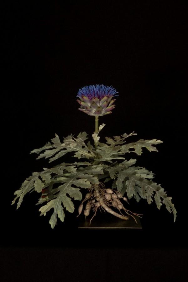 artichoke-plant-with-phalene-600x898-1