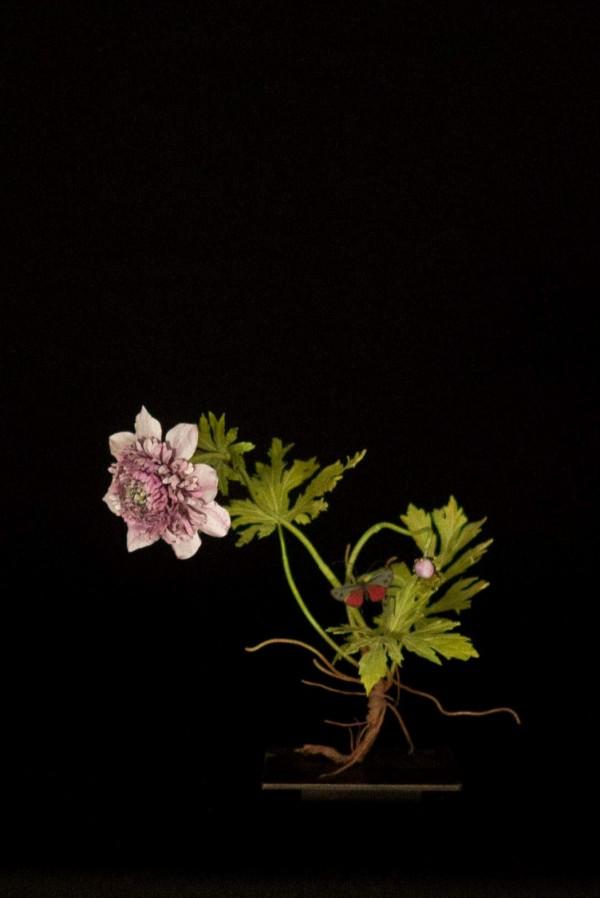 frilly-anemone-with-zygaenidae-600x898